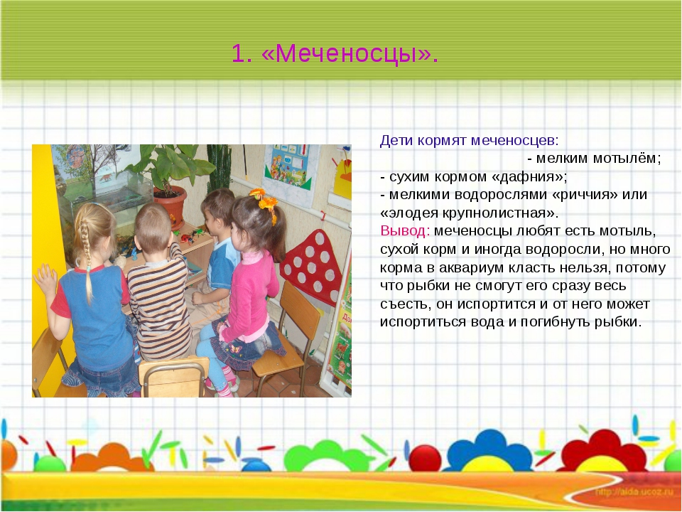 Дети кормят меченосцев: - мелким мотылём; - сухим кормом «дафния»; - мелкими...