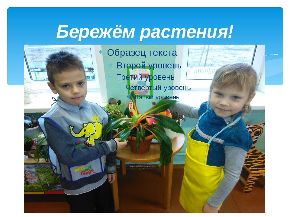 Бережём растения!