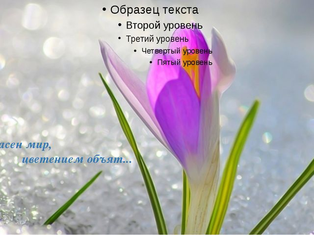 Прекрасен мир, цветением объят...