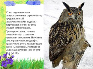 . Совы - один из самых распространенных отрядов птиц, представленный многочис