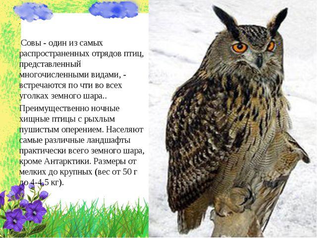 . Совы - один из самых распространенных отрядов птиц, представленный многочис...