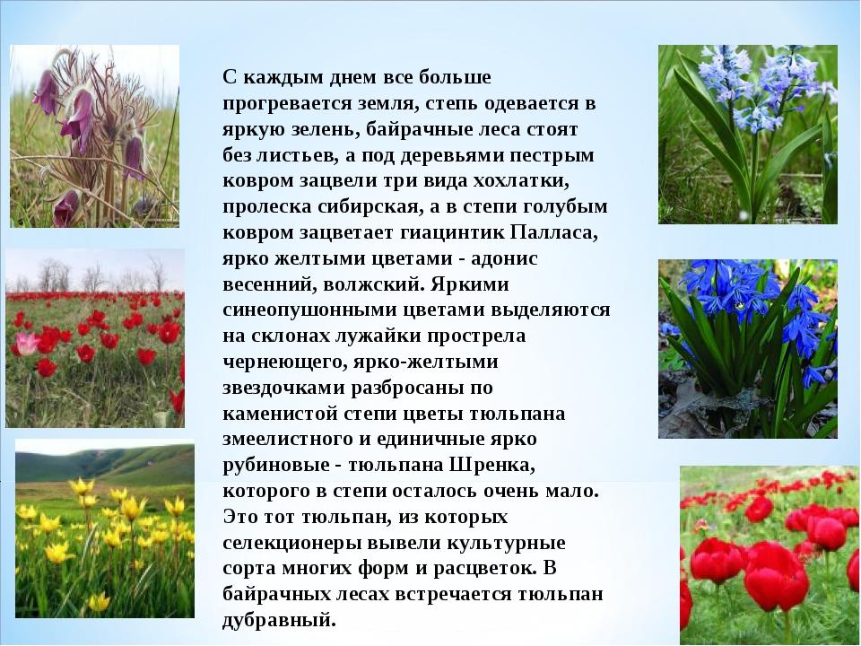 С каждым днем все больше прогревается земля, степь одевается в яркую зелень,...