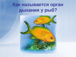 Как называется орган дыхания у рыб?