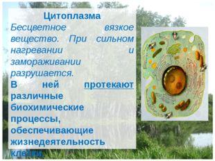 Цитоплазма Бесцветное вязкое вещество. При сильном нагревании и замораживании