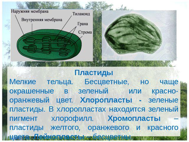 Пластиды Мелкие тельца. Бесцветные, но чаще окрашенные в зеленый или красно-о...