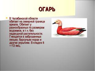 ОГАРЬ В Челябинской области обитает на северной границе ареала. Обитает у раз