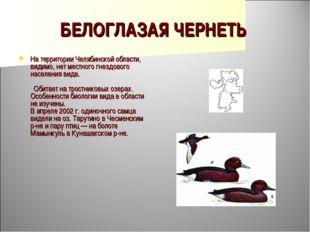БЕЛОГЛАЗАЯ ЧЕРНЕТЬ На территории Челябинской области, видимо, нет местного гн