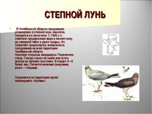 СТЕПНОЙ ЛУНЬ  В Челябинской области гнездование установлено в степной зоне,