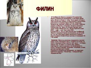 ФИЛИН  В Челябинской области в середине XX в.филин был обычен в Ильменском з