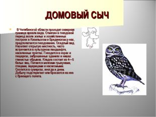 ДОМОВЫЙ СЫЧ  В Челябинской области проходит северная граница ареала вида. От