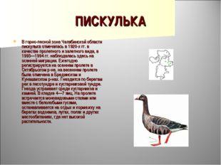 ПИСКУЛЬКА В горно-лесной зоне Челябинской области пискулька отмечалась в 1920