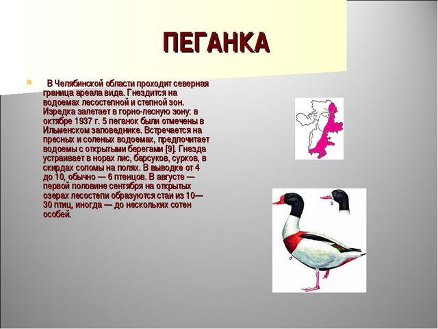 ПЕГАНКА  В Челябинской области проходит северная граница ареала вида. Гнезди...