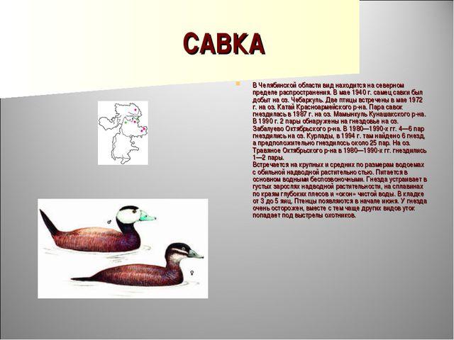 САВКА В Челябинской области вид находится на северном пределе распространения...