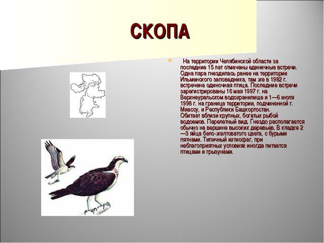 СКОПА  На территории Челябинской области за последние 15 лет отмечены единич...