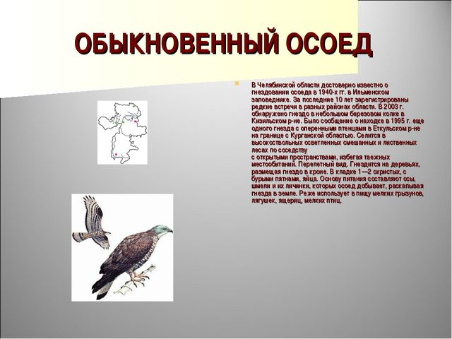 ОБЫКНОВЕННЫЙ ОСОЕД В Челябинской области достоверно известно о гнездовании ос...