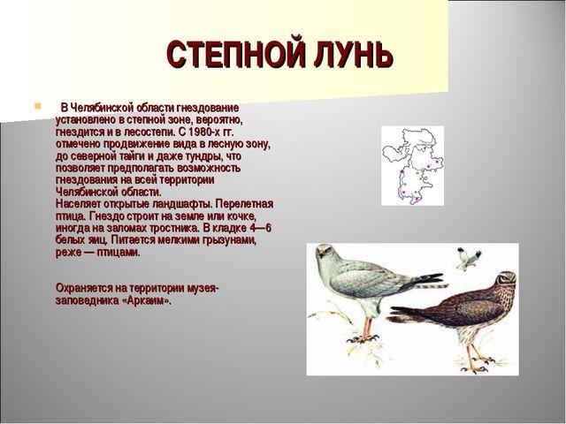 СТЕПНОЙ ЛУНЬ  В Челябинской области гнездование установлено в степной зоне,...