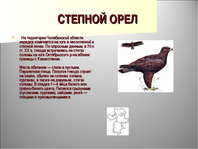 СТЕПНОЙ ОРЕЛ  На территории Челябинской области изредка отмечается на юге в...