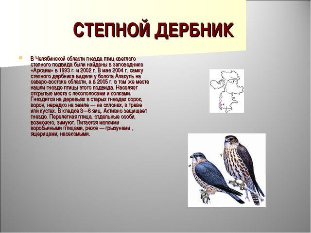 СТЕПНОЙ ДЕРБНИК В Челябинской области гнезда птиц светлого степного подвида б...