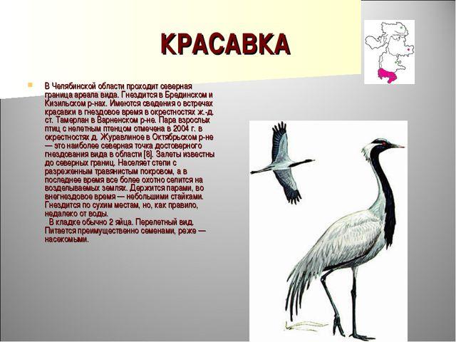 КРАСАВКА В Челябинской области проходит северная граница ареала вида. Гнездит...