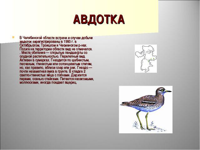 АВДОТКА В Челябинской области встречи и случаи добычи авдоток зарегистрирован...