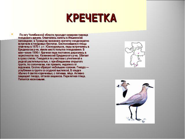 КРЕЧЕТКА  По югу Челябинской области проходит северная граница гнездового ар...