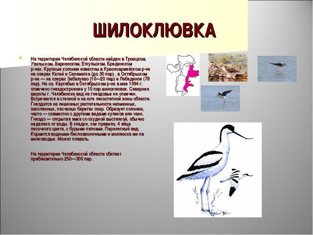 ШИЛОКЛЮВКА На территории Челябинской области найден в Троицком, Увельском, Ва...