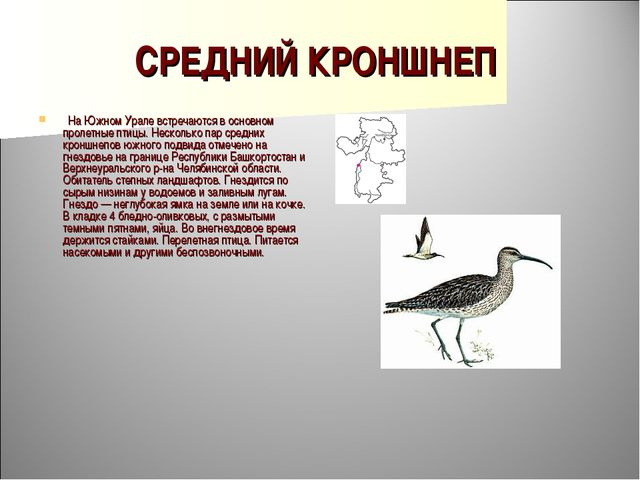 СРЕДНИЙ КРОНШНЕП  На Южном Урале встречаются в основном пролетные птицы. Нес...