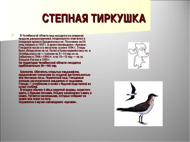 СТЕПНАЯ ТИРКУШКА  В Челябинской области вид находится на северном пределе ра...