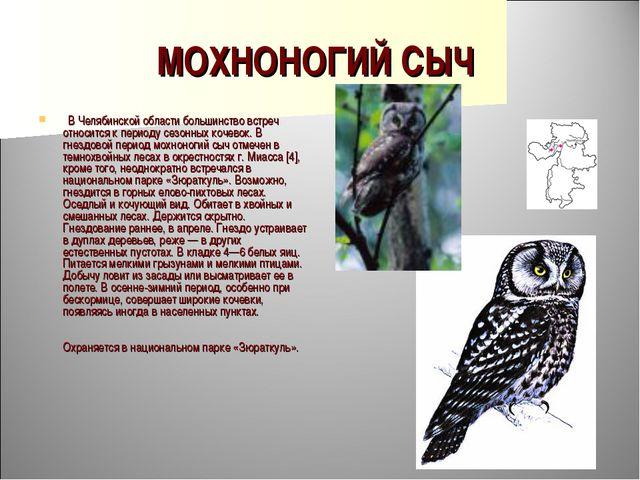 МОХНОНОГИЙ СЫЧ  В Челябинской области большинство встреч относится к периоду...