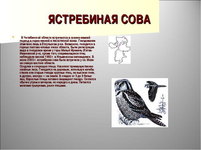ЯСТРЕБИНАЯ СОВА  В Челябинской области встречается в осенне-зимний период в...