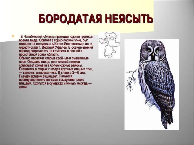 БОРОДАТАЯ НЕЯСЫТЬ  В Челябинской области проходит южная граница ареала вида....