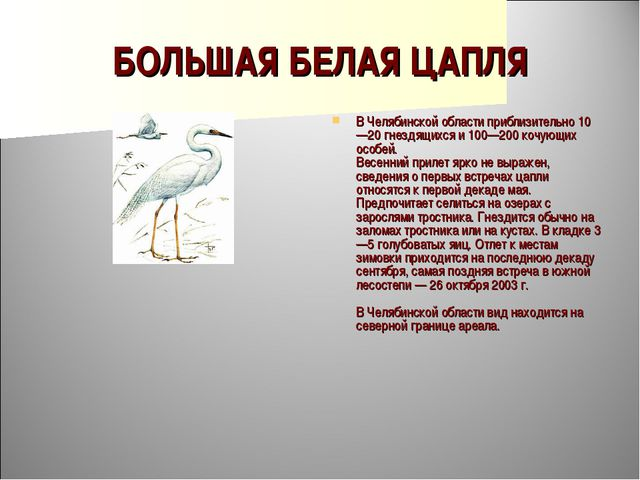 БОЛЬШАЯ БЕЛАЯ ЦАПЛЯ В Челябинской области приблизительно 10—20 гнездящихся и...
