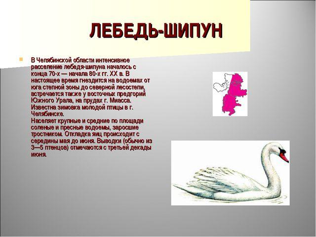 ЛЕБЕДЬ-ШИПУН В Челябинской области интенсивное расселение лебедя-шипуна начал...