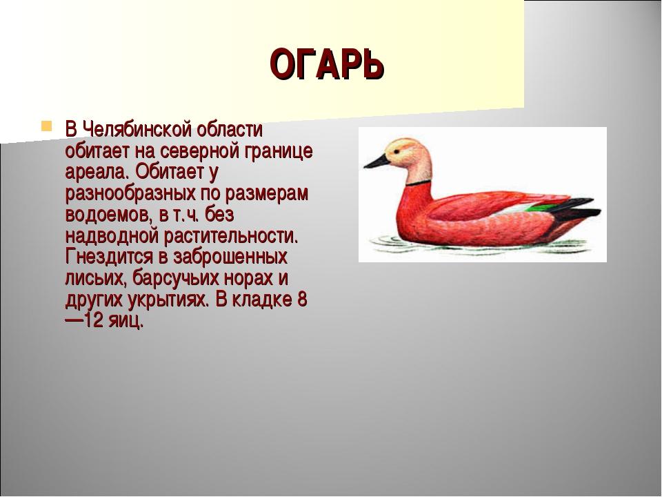 ОГАРЬ В Челябинской области обитает на северной границе ареала. Обитает у раз...