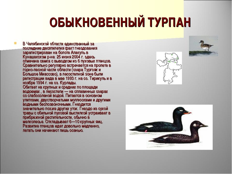 ОБЫКНОВЕННЫЙ ТУРПАН В Челябинской области единственный за последние десятилет...