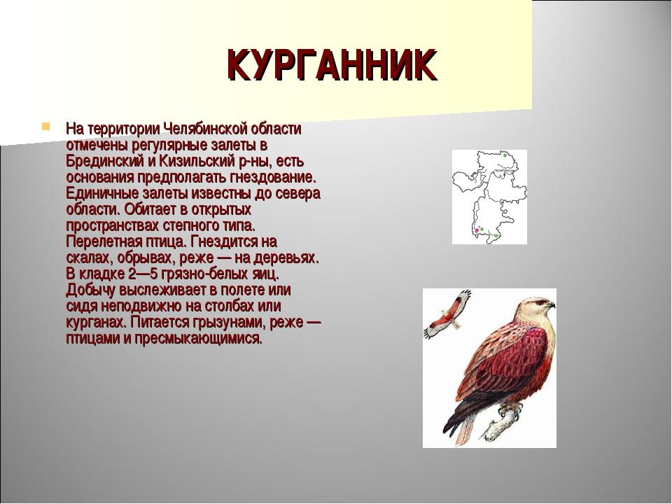 КУРГАННИК На территории Челябинской области отмечены регулярные залеты в Бред...