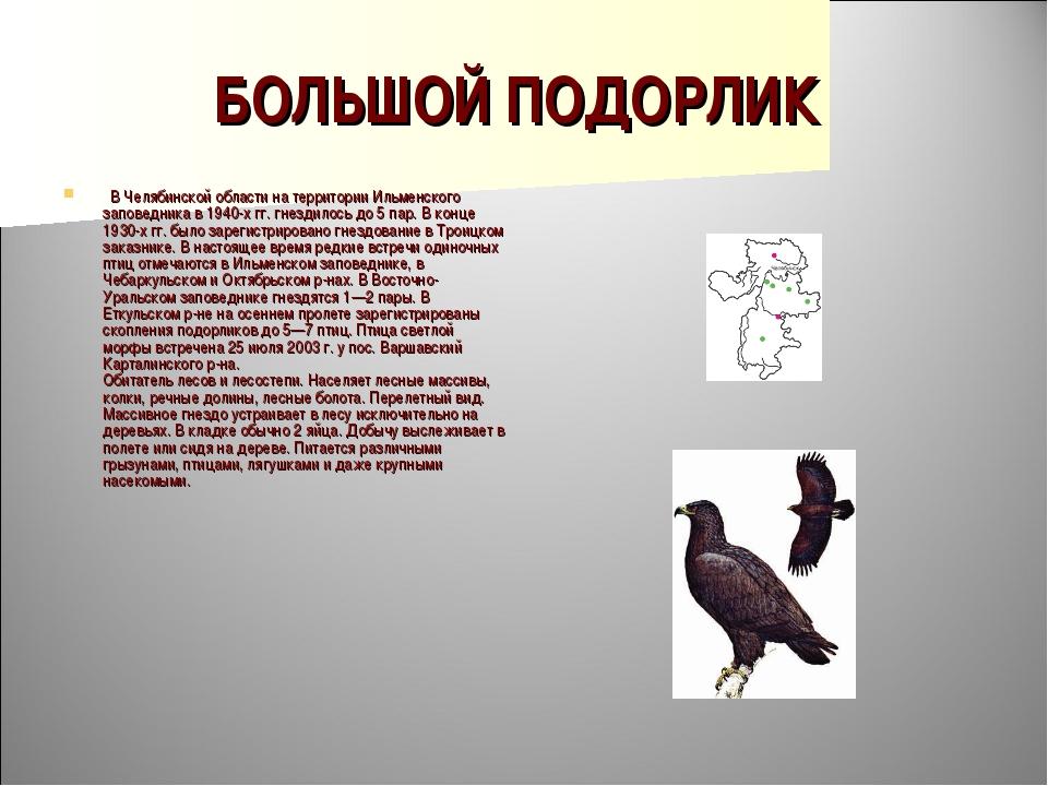 БОЛЬШОЙ ПОДОРЛИК  В Челябинской области на территории Ильменского заповедник...