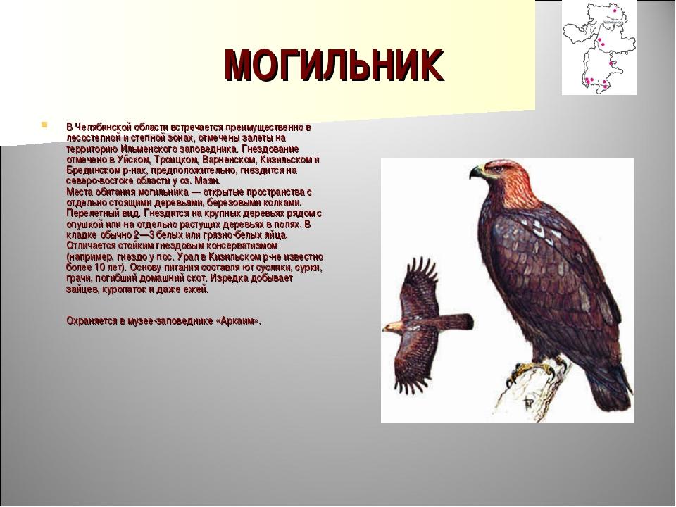 МОГИЛЬНИК В Челябинской области встречается преимущественно в лесостепной и с...