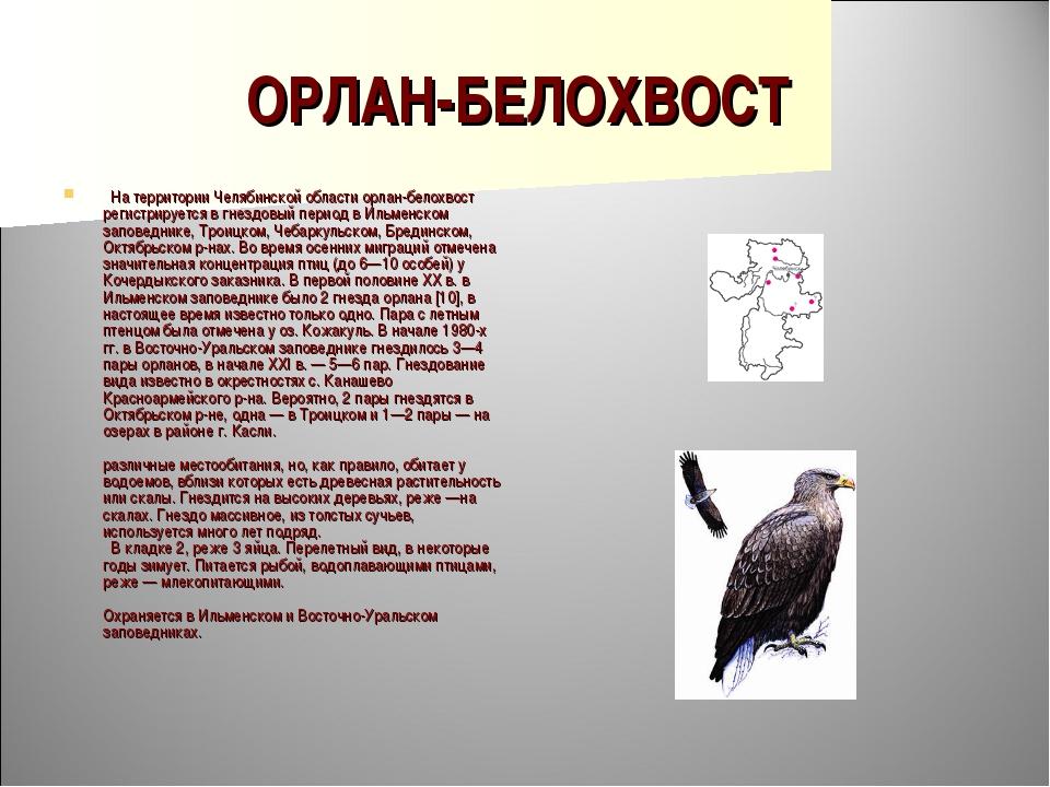 ОРЛАН-БЕЛОХВОСТ  На территории Челябинской области орлан-белохвост регистрир...