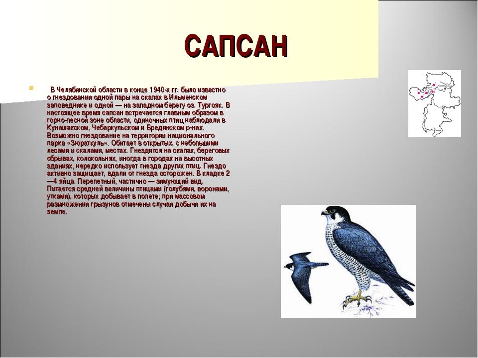 САПСАН  В Челябинской области в конце 1940-х гг. было известно о гнездовании...