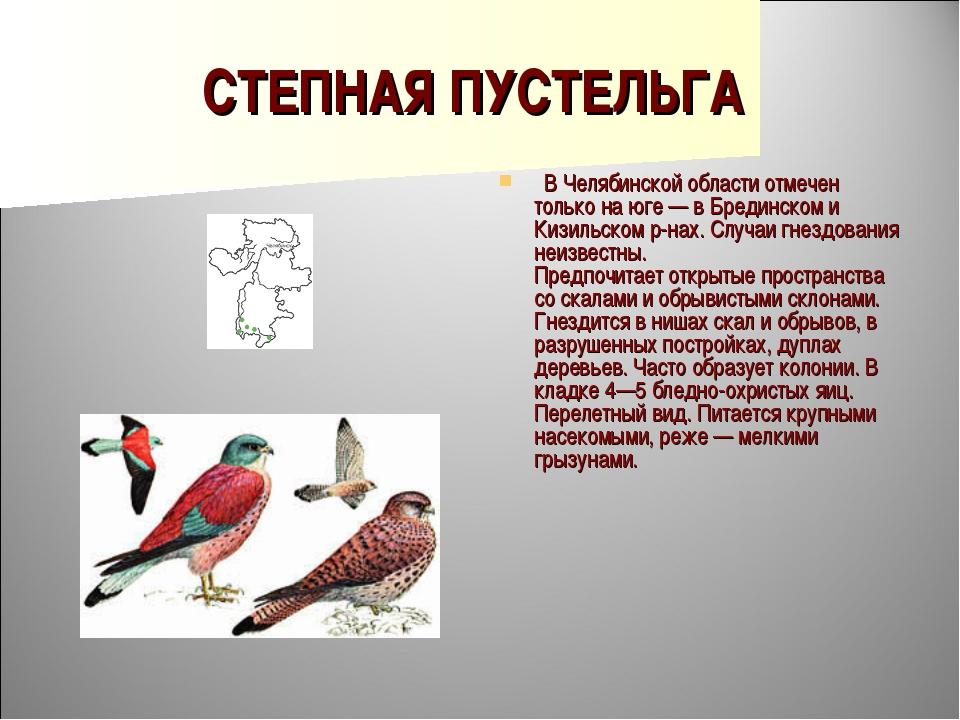 СТЕПНАЯ ПУСТЕЛЬГА  В Челябинской области отмечен только на юге — в Брединско...