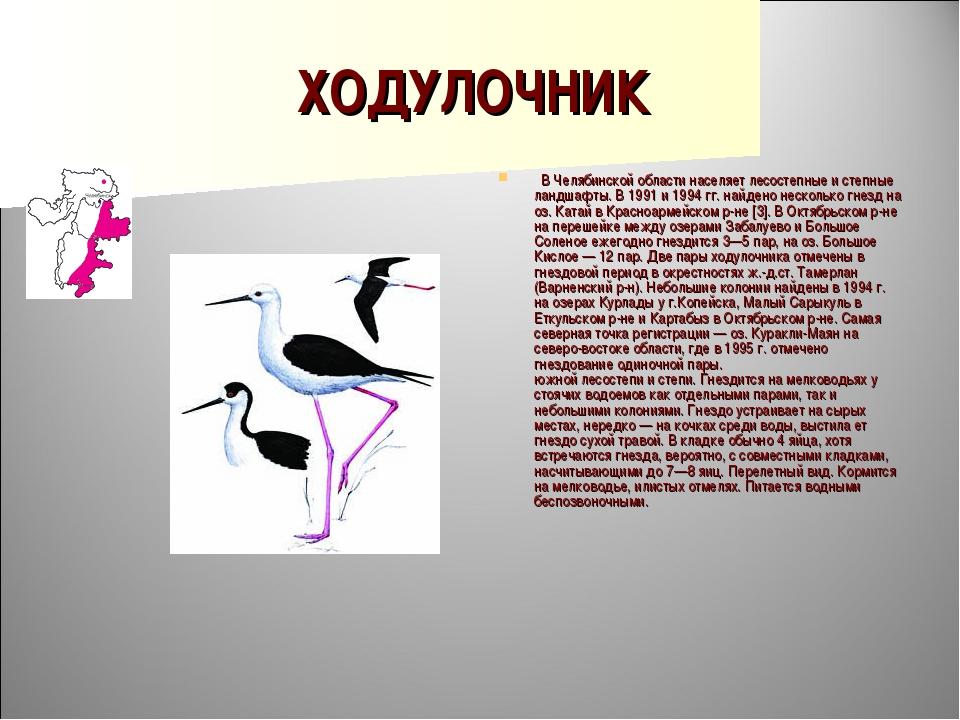 ХОДУЛОЧНИК  В Челябинской области населяет лесостепные и степные ландшафты....