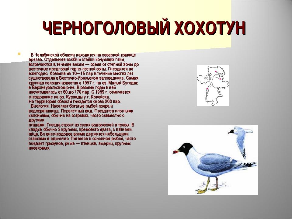 ЧЕРНОГОЛОВЫЙ ХОХОТУН  В Челябинской области находится на северной границе ар...