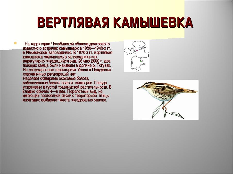 ВЕРТЛЯВАЯ КАМЫШЕВКА  На территории Челябинской области достоверно известно о...