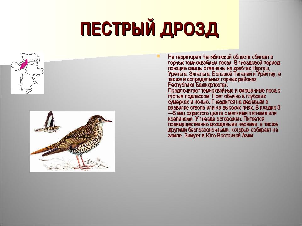 ПЕСТРЫЙ ДРОЗД На территории Челябинской области обитает в горных темнохвойных...