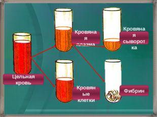 Цельная кровь Кровяная плазма Кровяная сыворотка Фибрин Кровяные клетки