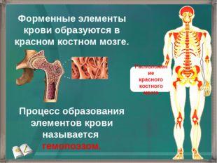 Форменные элементы крови образуются в красном костном мозге. Процесс образова