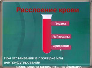 Расслоение крови При отстаивании в пробирке или центрифугировании кровь можно