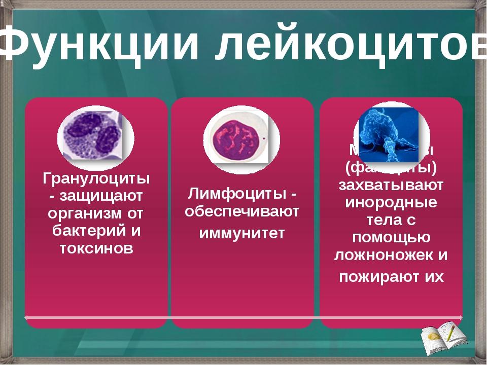 Функции лейкоцитов