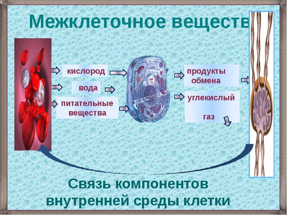 кислород вода питательные вещества углекислый газ продукты обмена Межклеточн...